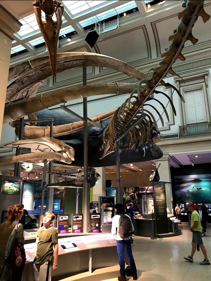 Smithsonian6
