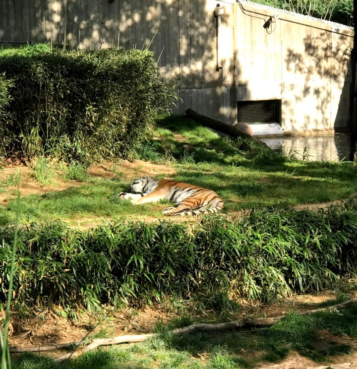TigerSmithZoo